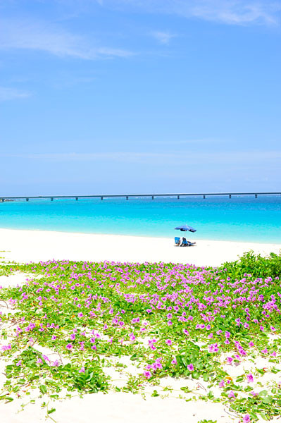 与那覇前浜ビーチとヒルガオ|宮古島の民宿 あがりの宿さんさーら