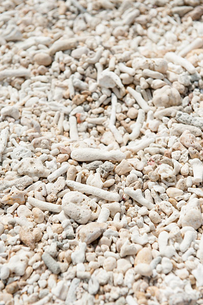 吉野海岸、砂浜の珊瑚