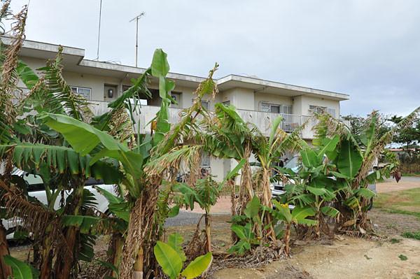 島バナナのある団地
