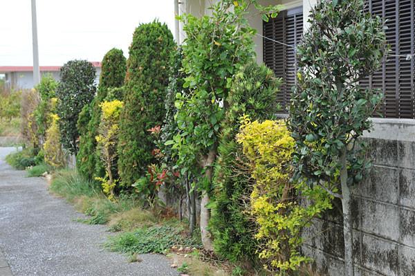 色とりどりの庭木|宮古島の民宿 あがりの宿さんさーら
